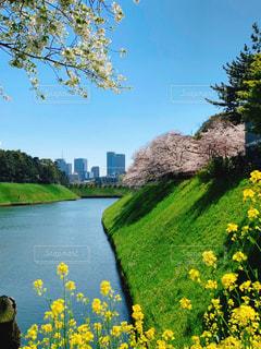 木々に囲まれたお堀の黄色い花の写真・画像素材[2278349]