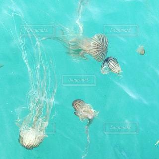 水の中を泳ぐ鳥の写真・画像素材[2329817]