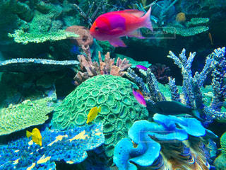 サンゴの水中眺めの写真・画像素材[2342350]