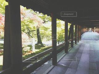 自然,屋外,京都,廊下,レトロ,樹木,ナチュラル,フィルム,寺社,ノスタルジック,フィルム写真,レトロ写真,盛夏,通天橋,フィルムフォト