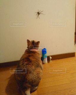 大きな猫と蜘蛛の写真・画像素材[1992349]