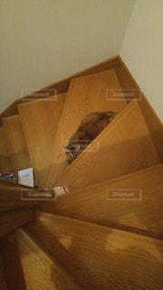 猫,動物,屋内,階段,茶色,かくれんぼ,面白い猫