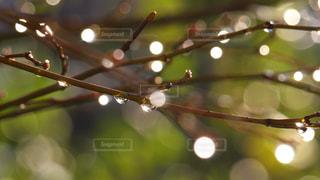 キラキラの雨上がりの写真・画像素材[2116588]