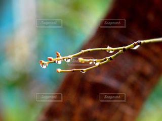 自然,木,森,植物,水滴,キラキラ,水玉,雨上がり,雫,しずく,液滴