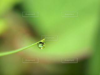 自然,雨,緑,植物,水滴,草,水玉,雫,しずく,ドロップ,草木,マクロ,潤い