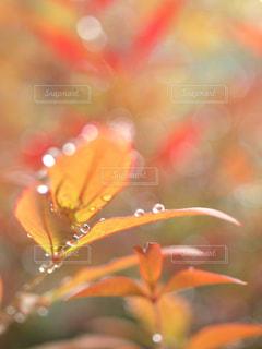 雨滴の園の写真・画像素材[2138878]