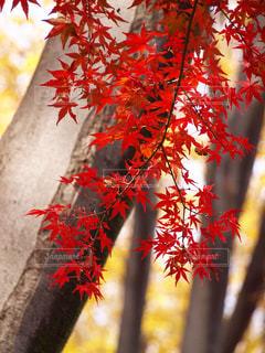 秋風に揺れての写真・画像素材[2659789]