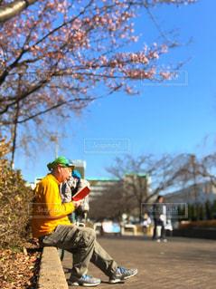 桜の下で読書の写真・画像素材[2929305]