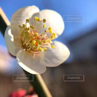 冷たい風と春の日差しの写真・画像素材[3015286]