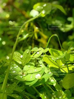 緑の葉のクローズアップの写真・画像素材[3020656]