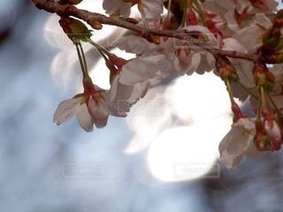 木陰に吹く風の写真・画像素材[3038009]