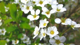 新緑と白い天使の写真・画像素材[3149402]