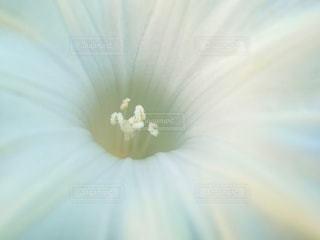 白い花のクローズアップの写真・画像素材[3340354]
