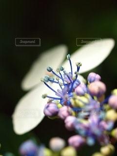 伸び伸びと咲いたの写真・画像素材[3376292]