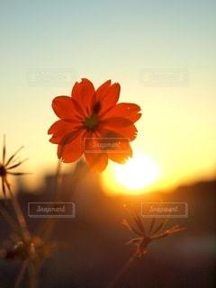 夕陽眺めての写真・画像素材[3398120]