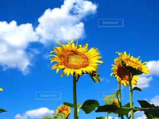 夏空に元気いっぱい!の写真・画像素材[3494357]