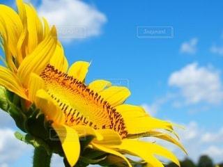 夏の風に吹かれての写真・画像素材[3494352]