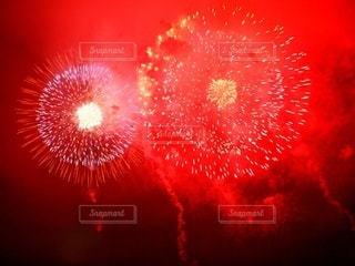 ふたつの紅い華の写真・画像素材[3634543]