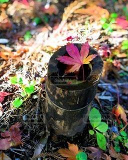 竹林にての写真・画像素材[3807733]