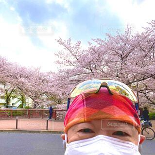 満開の桜とボクの写真・画像素材[4293328]