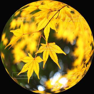 秋色のガラス玉の写真・画像素材[4302310]