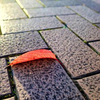 紅い落葉ひとつの写真・画像素材[4465456]