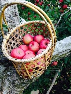 おじいちゃんのりんごで満たされたかごの写真・画像素材[3705284]