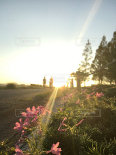朝の公園の写真・画像素材[2631327]