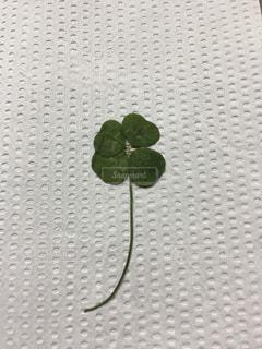 緑,ハート,クローバー,四つ葉