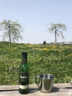 空,花,屋外,ボトル,ドリンク,草木
