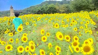 自然,風景,空,花,夏,屋外,ひまわり,雲,青,後ろ姿,黄色,山,背中,女子中学生,半袖