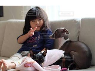 犬,動物,ピース,娘,わんちゃん