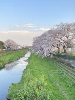 空,花,春,屋外,水面,景色