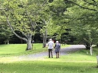 公園,散歩,樹木,人物,草木