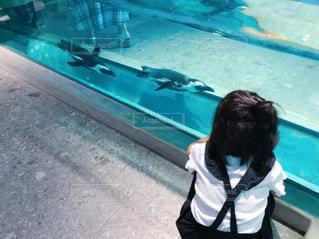 後ろ姿,水族館,ペンギン,女の子