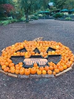 かぼちゃの写真・画像素材[2613963]