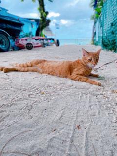 猫,動物,屋外,ビーチ,砂浜,景色,ペット,ネコ