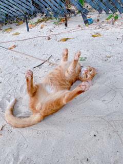猫,動物,屋外,ペット,ネコ