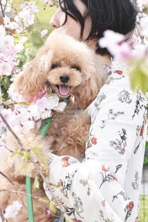 犬の写真・画像素材[2006146]