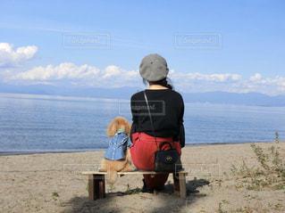 犬,自然,風景,空,動物,屋外,ビーチ,かわいい,海岸,鮮やか,人物,人,プードル,眺め