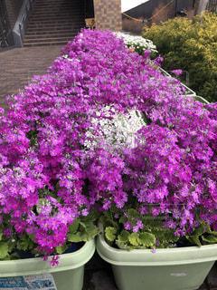 花の写真・画像素材[2018430]