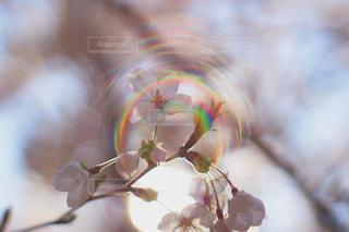 花の写真・画像素材[1988344]