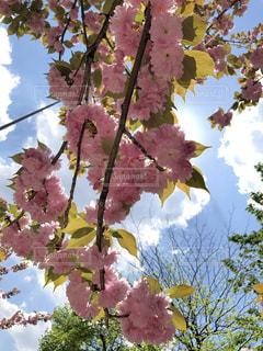 水色とピンクの写真・画像素材[2272377]