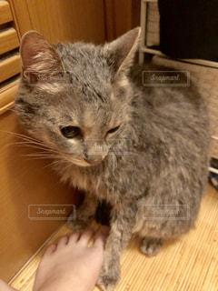 お風呂あがりの猫の写真・画像素材[2292100]