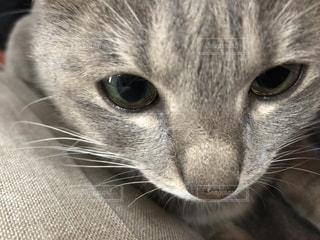 猫のクローズアップの写真・画像素材[2292739]