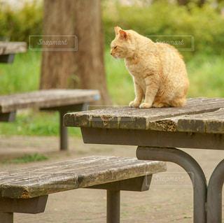 猫,公園,動物,屋外,茶色,座る,木目,キャット,ミルクティー色
