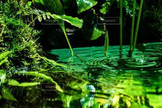 自然,水滴,水面,葉,雫,ドロップ,草木