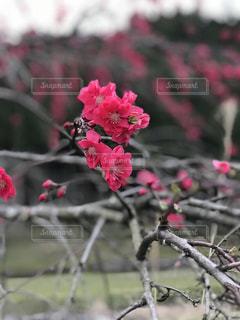 春の写真・画像素材[2056086]