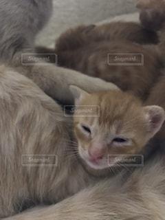猫,動物,子猫,キティ