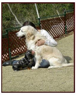 犬,動物,思い出,ダックスフンド,犬と私,ゴールデン ・ リトリーバー